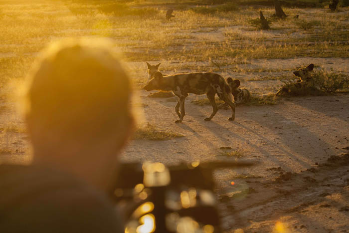 photographing-wild-dogs
