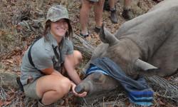 rhino-darting