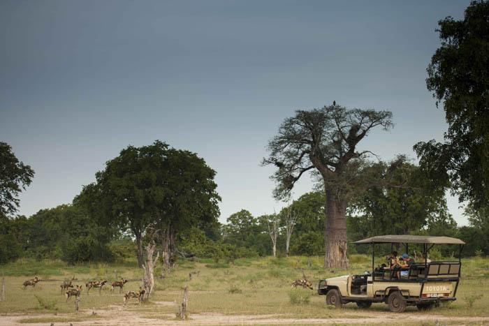 safari-in-Luangwa