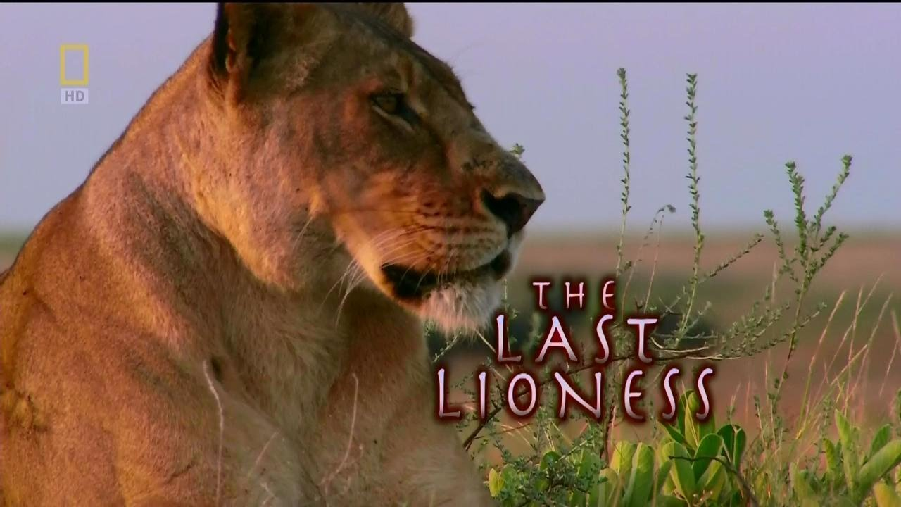 the-last-lioness