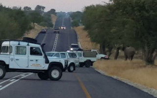 A elephant was strolling leisurely on the main road in the direction of Hoedspruit Lafras Tremper