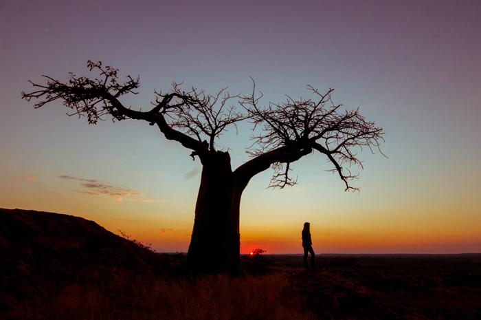 Baobab-at-sunset