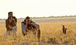 Christian-Boix-botswana-meerkats