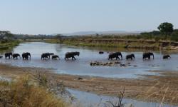 Elephants-crossing-Tarangire-National-park