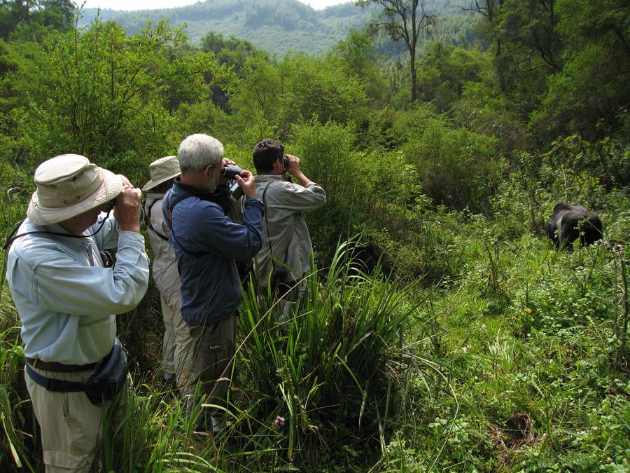 Group-watching-Gorillas-at-Virungas-National-Park