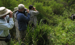 Group-watching-Gorillas-at-Virungas-National-Park