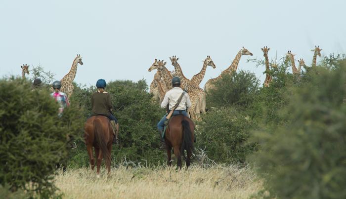 Joining-a-group-of-giraffe-on-horseback
