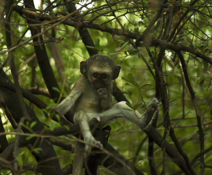 monkey-wildlife-photography