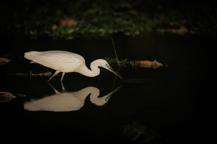 Reflective-photograph-of-crane