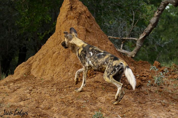 ผลการค้นหารูปภาพสำหรับ anthill and dogs