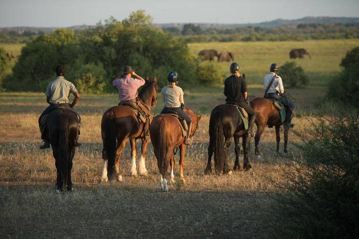 animal-sightings-on-horseback