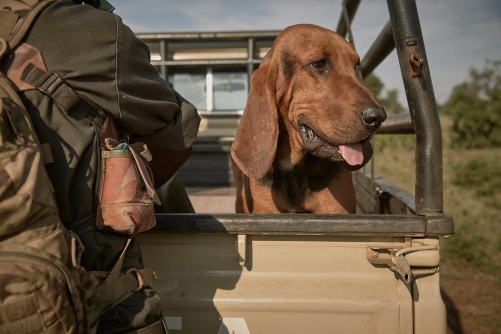 anti-poaching-dog-ravi-gajjar