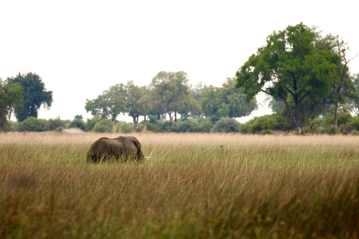 botswana-elephant
