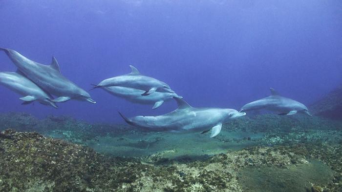 bottlenose-dolphins-ocean