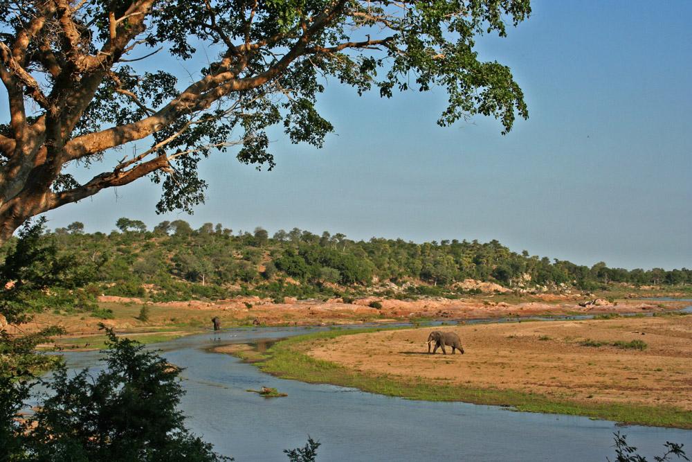 crocodile-river-elephants-janine-avery