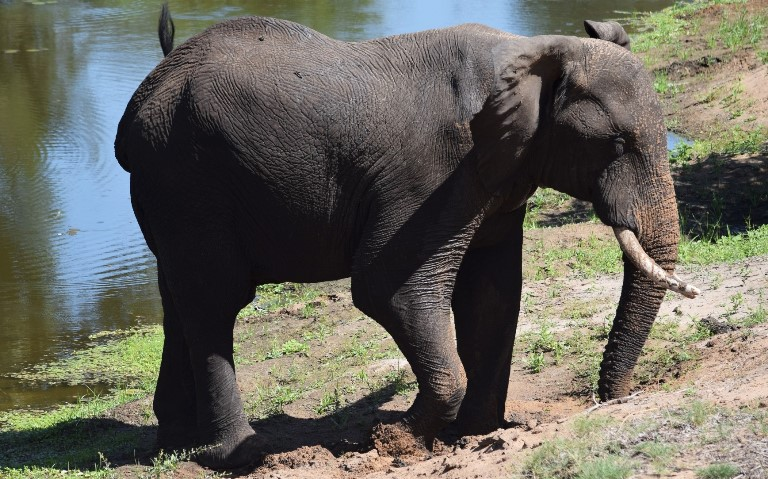 Elephants frequently also dig around other water sources so as to find a better quality of water