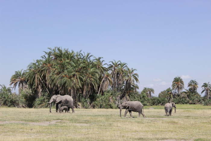 An elephant family in Amboseli National Park ©David Winch