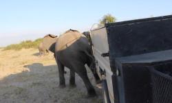 elephant-trailer