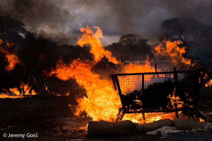 fires-burning-ivory-kenya