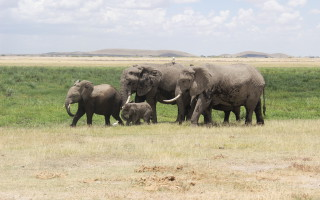 A herd of elephants wanders past in Amboseli National Park ©David Winch