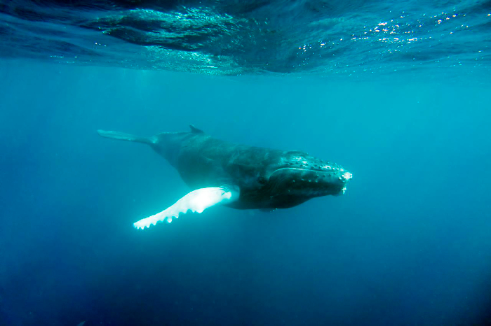 humpback chistopher michel