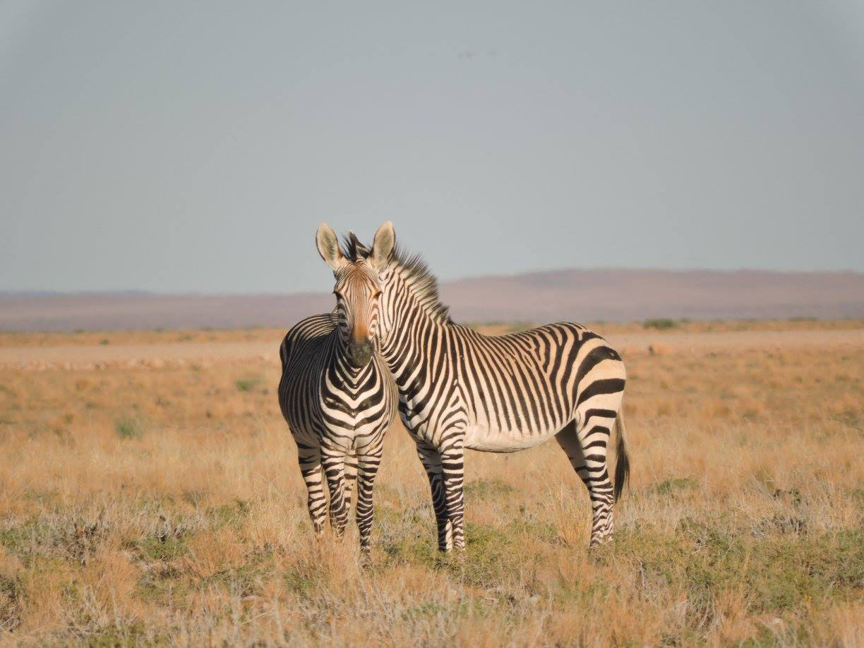 illusions-of-nature-namib-desert-namibia-gal-zanir