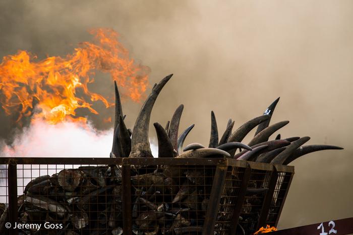 ivory-burn-nairobi-kenya