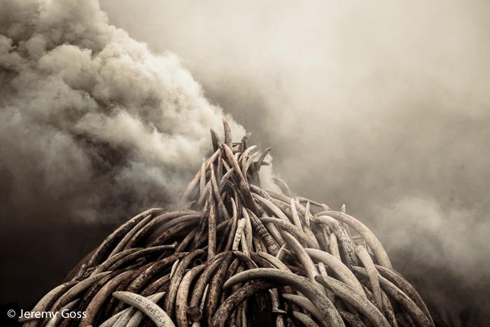 ivory-burn-smoke