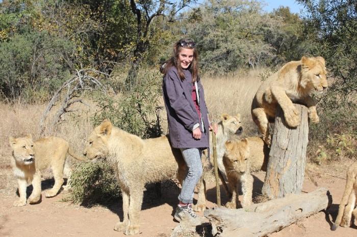 lion-volunteer