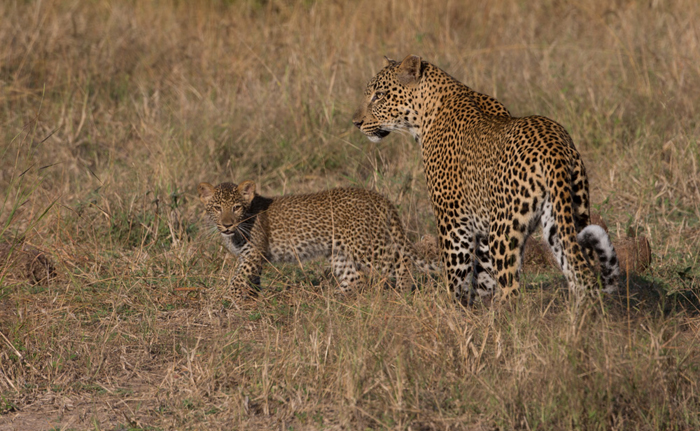 lucy-and-leopard-cub