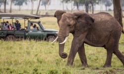 maasai-mara-kenya-art-safari