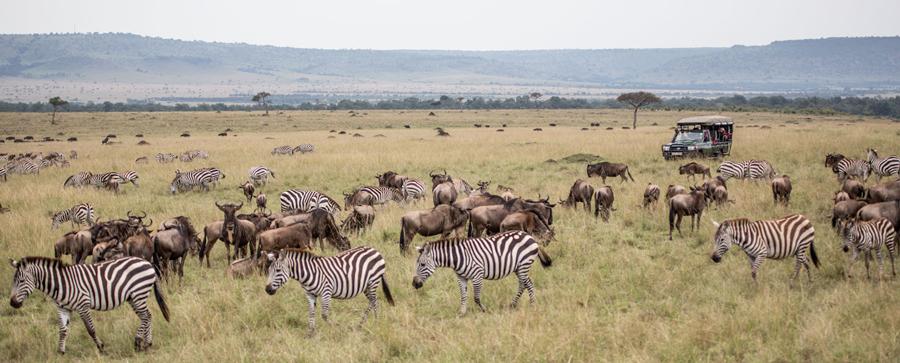 maasai-mara-kenya-safari