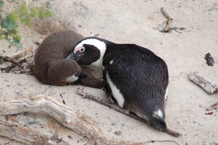 penguin joachim huber