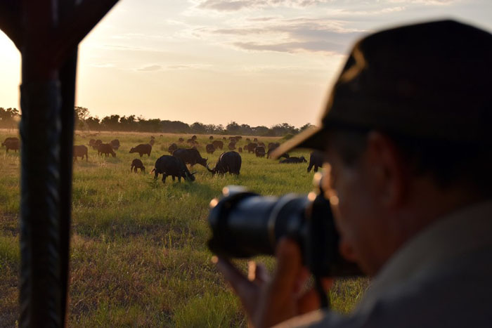 photographing-wildlife