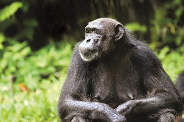 K Kutta Monkey Walk Download Africa's Ultimate Pr...