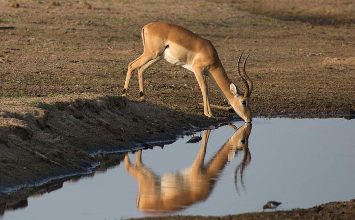 reflective-photograph-of-antelope