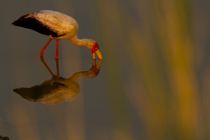 reflective-photograph-of-bird