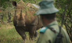 rhino-ranger