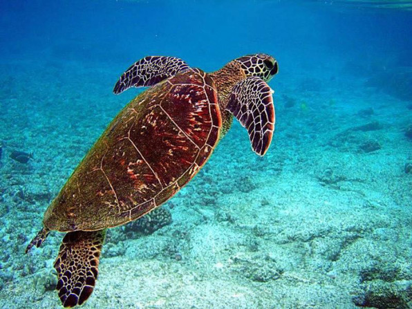 sea-turtle-Madagascar