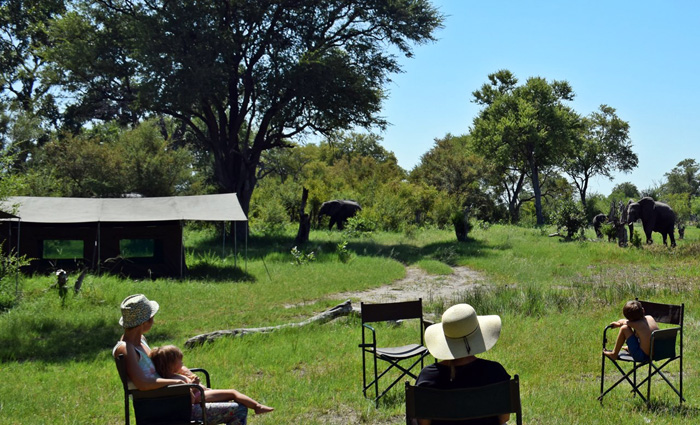 wildlife-spotting-at-camp