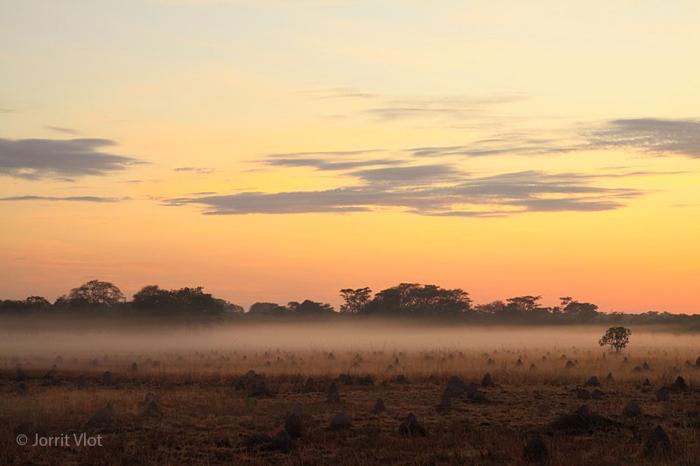 sunrise-at-kasanka