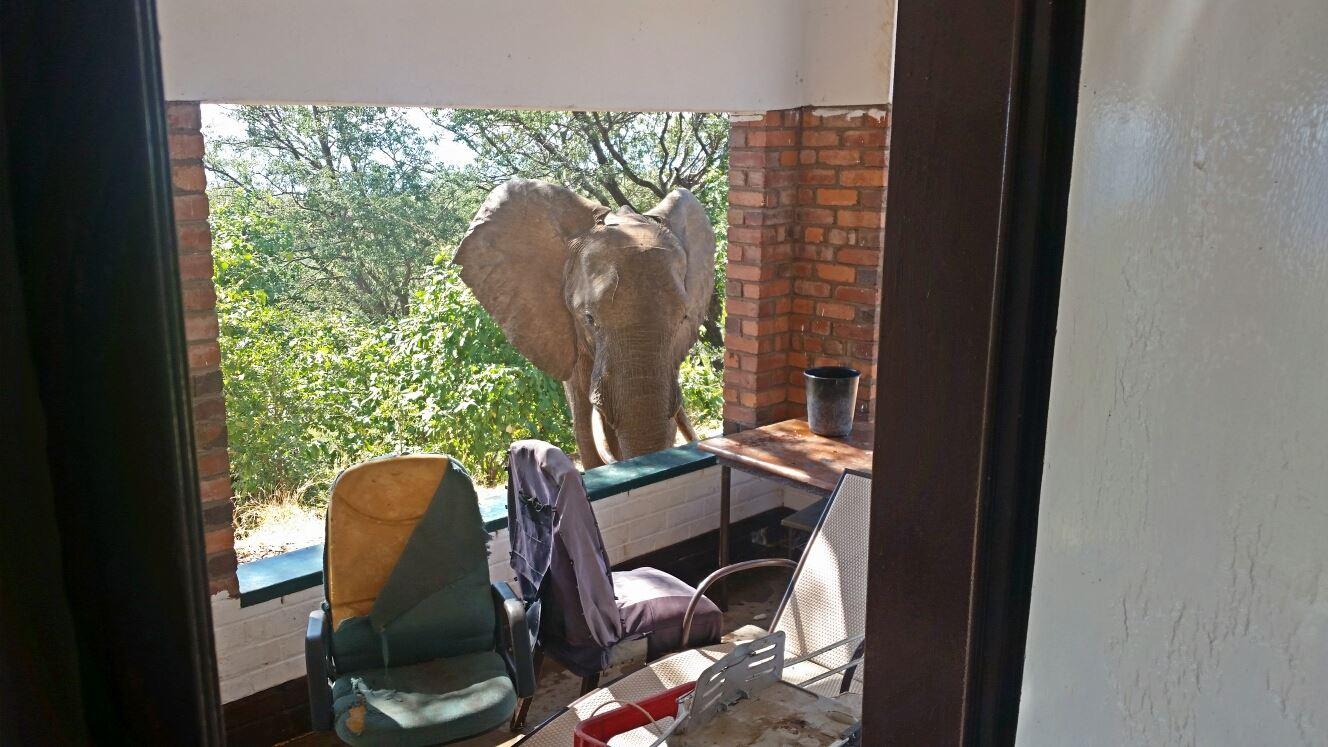 elephant-at-Bumi-Lodge