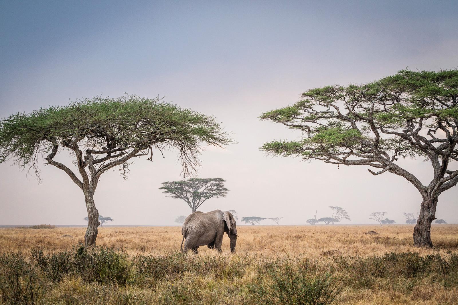 Reflections on Elephants