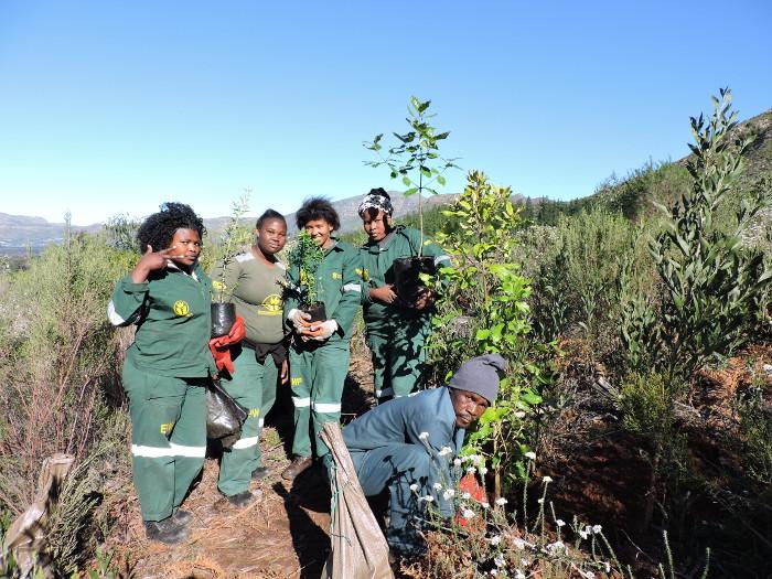 tree-planting-cecilia