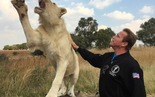 Arnold-Schwarzenegger-lion-petting