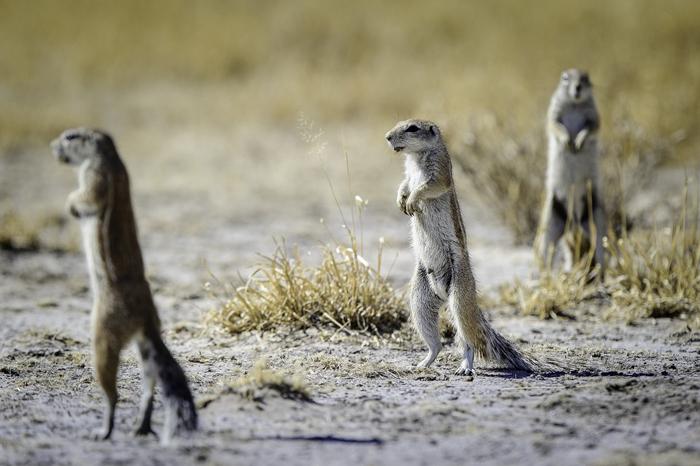 curious-wildlife-sighting-on-self-drive-safari-in-botswana