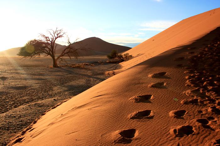 Delta-and-Desert