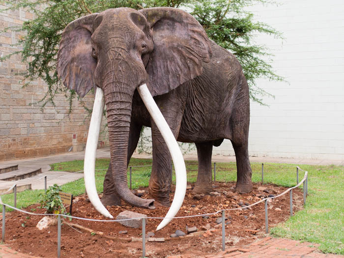 Marsabit-National-Park_Cast-of-Ahmed-the-Elephant