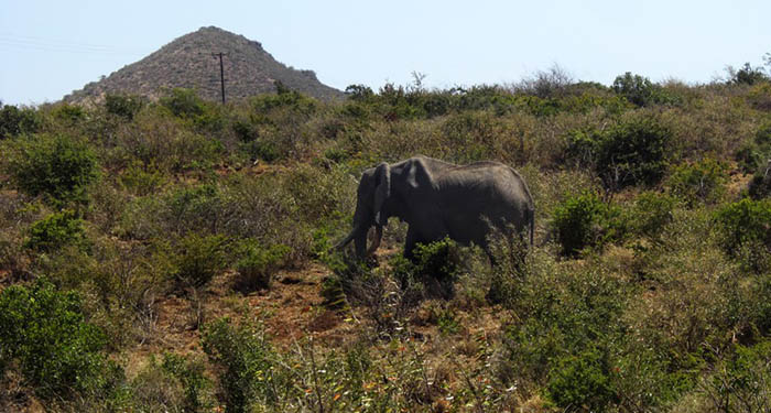 Marsabit-National-Park_Elephant outside park