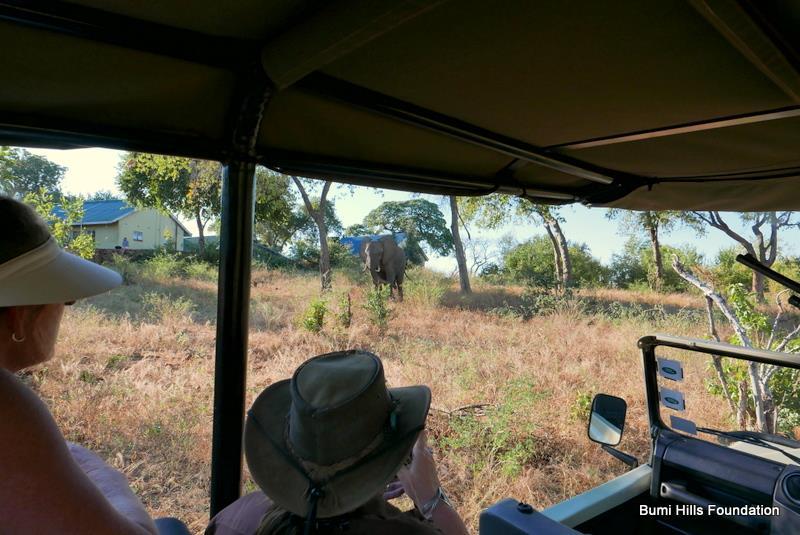 elephant-darting
